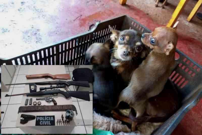 Polícia resgata 15 cães em situação precária e prende homem, em Campina da Lagoa, PR
