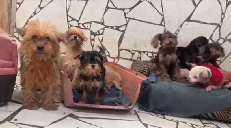 Polícia Civil encontra canil clandestino, com 80 cachorros, na Região de Curitiba