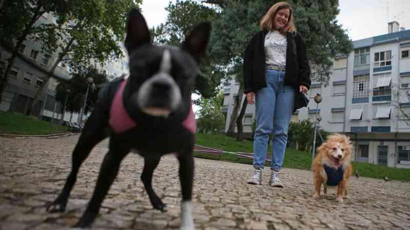 Em Portugal, cães tutelados por idosos vão à rua pela mão de futuros veterinários