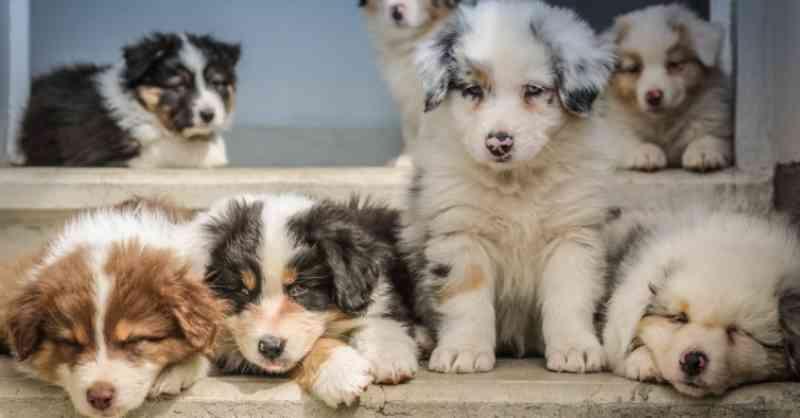 Portugal: a SOS Animal precisa de ajuda para apadrinhar cães — e é assim que pode apoiar