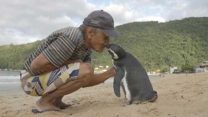 """Pinguins são conhecidos pela lealdade àqueles a quem destinam seu afeto, e se alguém ainda divida disso, basta tomar nota da história deste pinguim que todos os anos nada da Patagônia até uma praia brasileira para passar alguns meses com seu """"melhor amigo""""."""