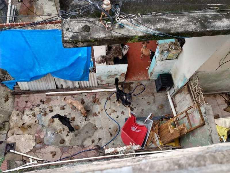 Animais são encontrados em cenário de total abandono dentro de casa no Jardim América, no Rio