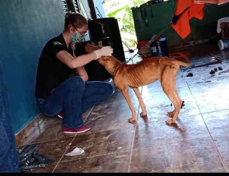 Em menos de 4 meses, mais de 70 denúncias de maus-tratos a animais são registradas em Porto Velho, RO
