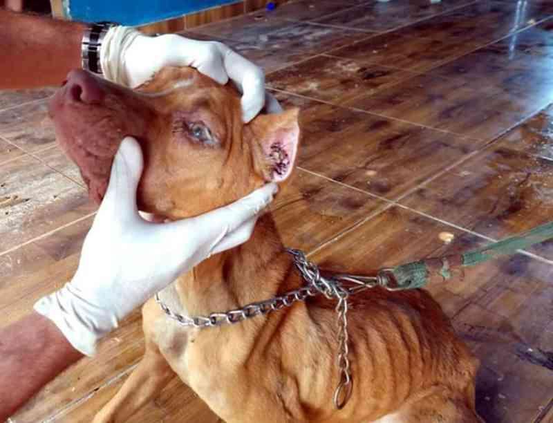 Policiais resgatam cães em situação de maus-tratos na Porto Velho, RO