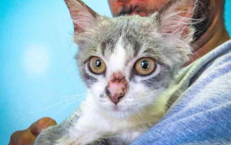 Ração para gatos é a prioridade da campanha de doação da prefeitura de Porto Alegre, RS