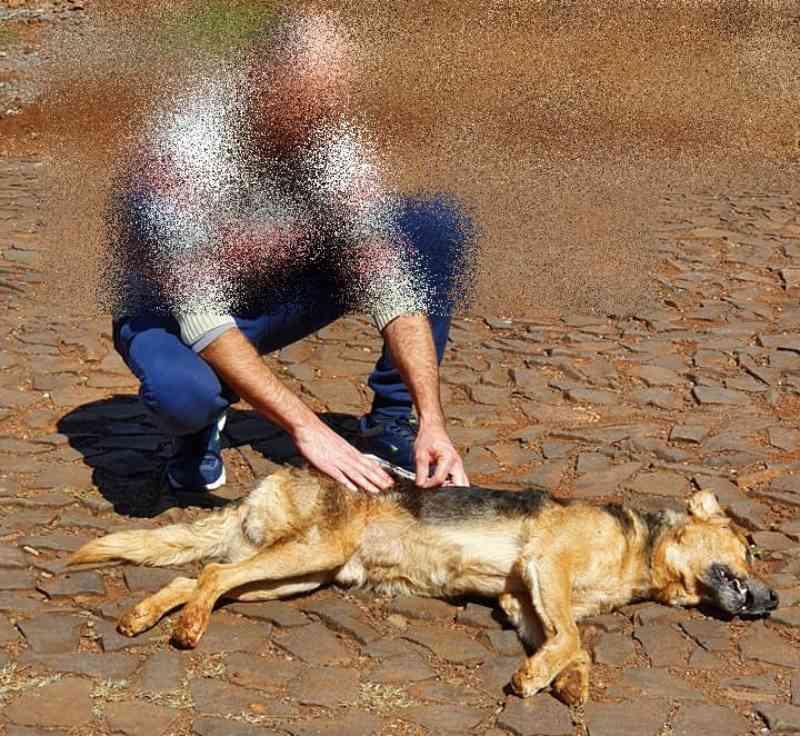 Cão é morto com tiro de chumbinho em Viadutos, RS