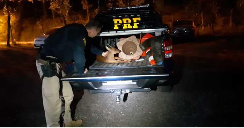 Policiais fizeram a remoção do animal com segurança (Cred. PRF)
