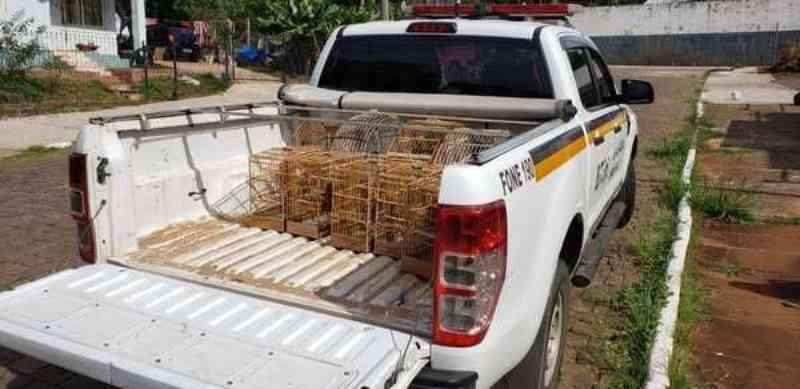 Patrulha Ambiental já apreendeu 39 aves em cativeiro desde janeiro em Estrela, RS