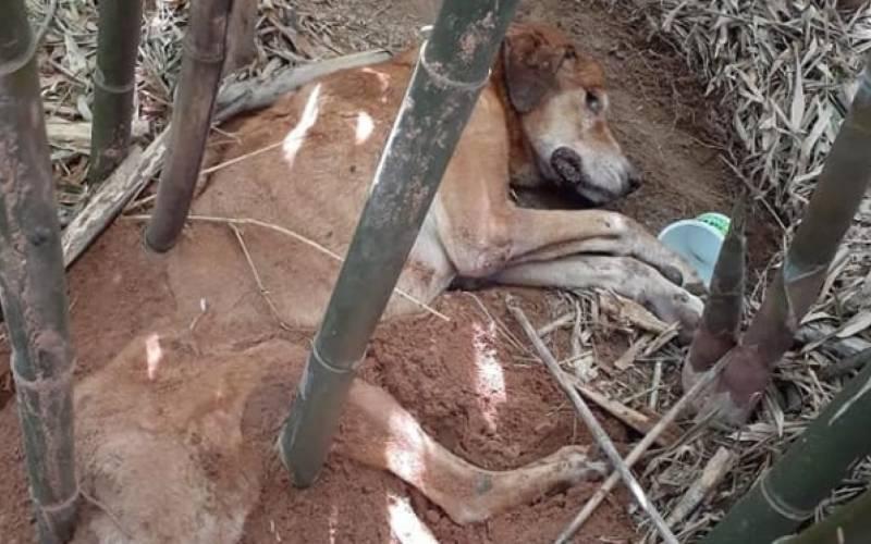 Cadela é resgatada após ser enterrada viva em Sapucaia do Sul, RS