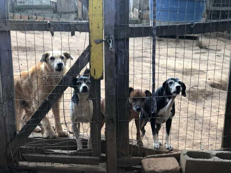 Dez animais foram adotados desde o início do projeto — Foto: Divulgação