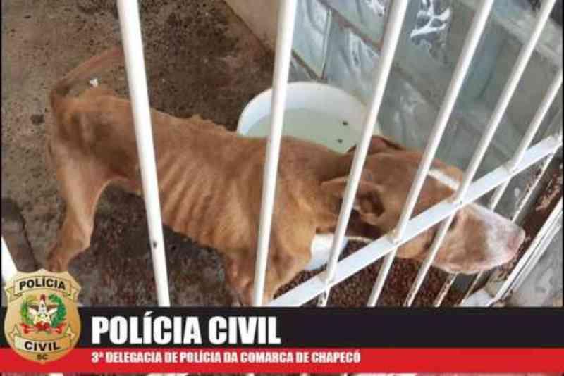 Homem é preso por maus-tratos a animais e constrangimento de criança em Chapecó, SC