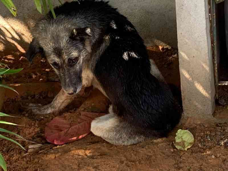 Cachorro que sofreu maus-tratos é resgatado em Joinville, SC