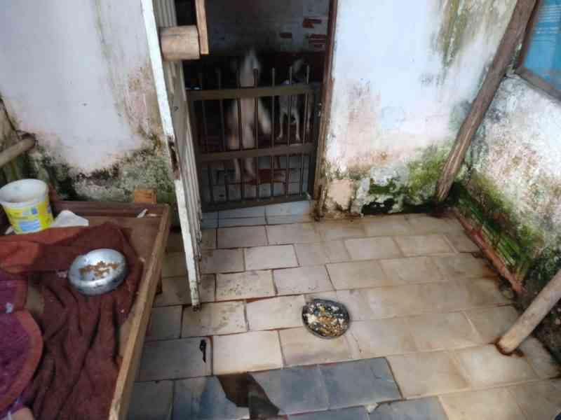 Maus-tratos a animais: 10 cães negligenciados são resgatados em Joinville, SC
