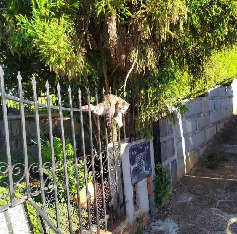 Bombeiros resgatam gato que ficou preso em cerca no Oeste de SC