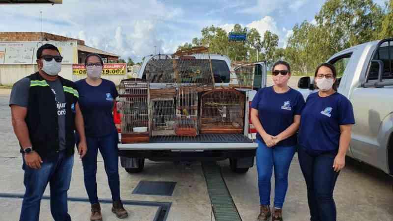 Adema apura denúncias e resgata animais silvestre em Indiaroba, SE