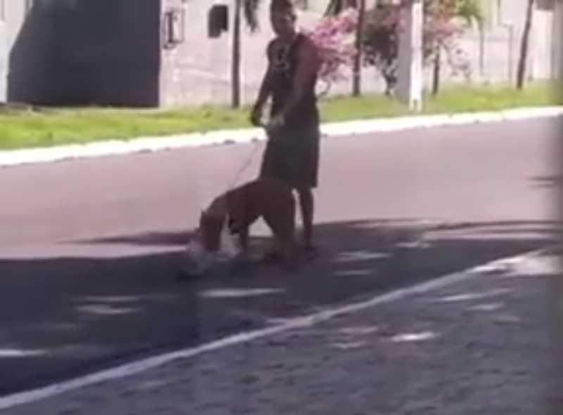 Polícia investigará vídeo em que homem usa cachorro para atacar gato em SE