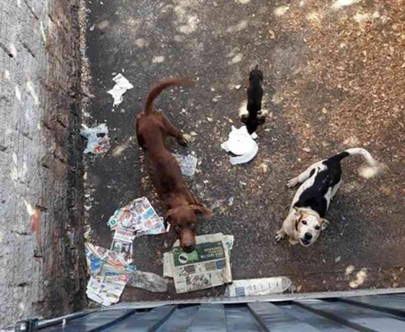 Polícia encontra cães sem comida, infestados de carrapatos e sarna em casa abandonada, em Barretos, SP