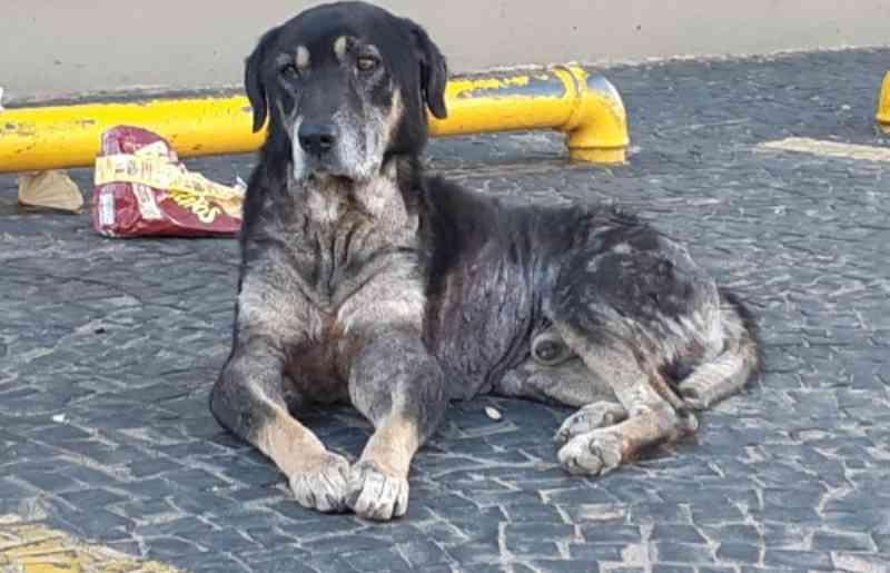 Cachorro estava em frente ao Banco do Brasil, no Botafogo