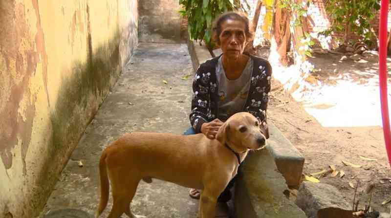 Coronavírus: ONGs em Campinas (SP) registram aumento de até 54% em pedidos para adoção de animais