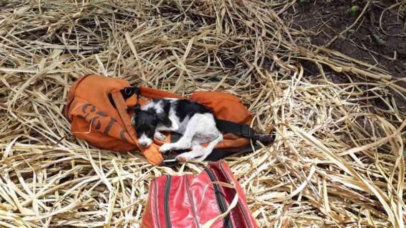 Bombeiros salvam cachorra durante resgate de jovem que caiu em penhasco em Marília, SP