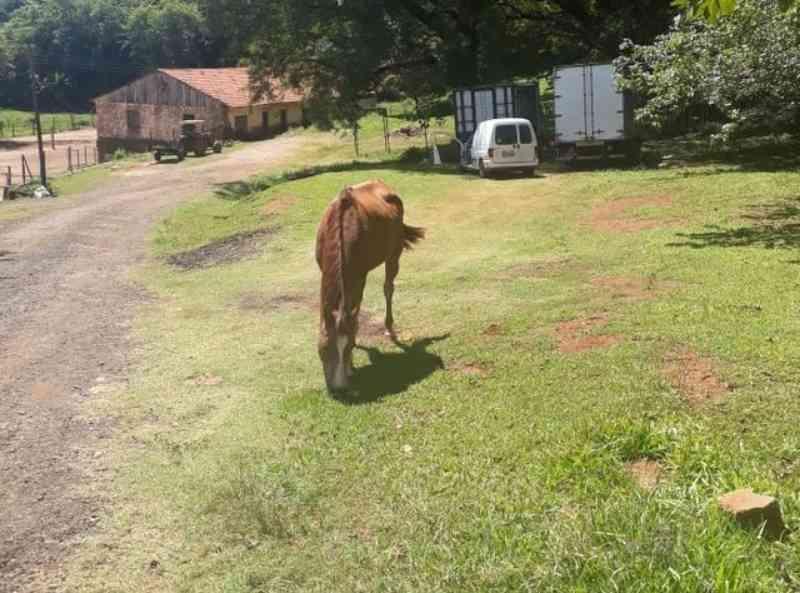 Animais abandonados em Piracicaba (SP) podem ser resgatados através do Disk Animais