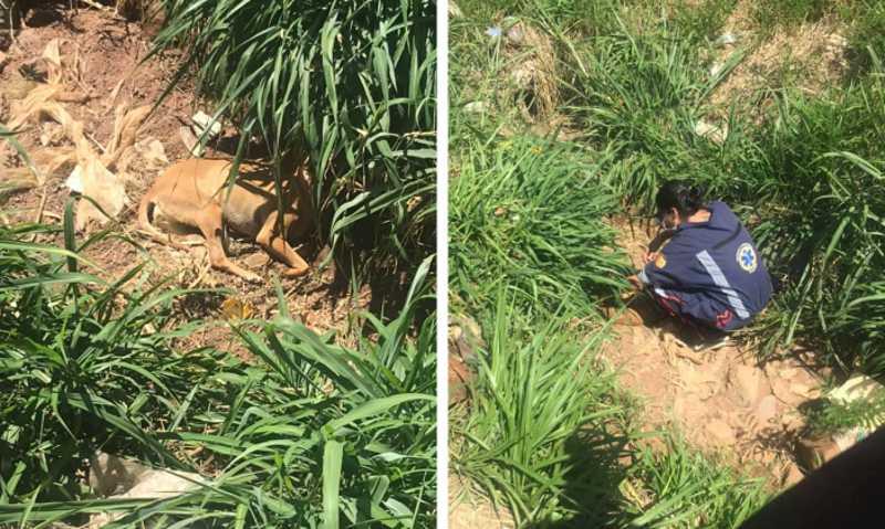 Cão é arremessado pela janela de veículo em matagal após ter sido atropelado