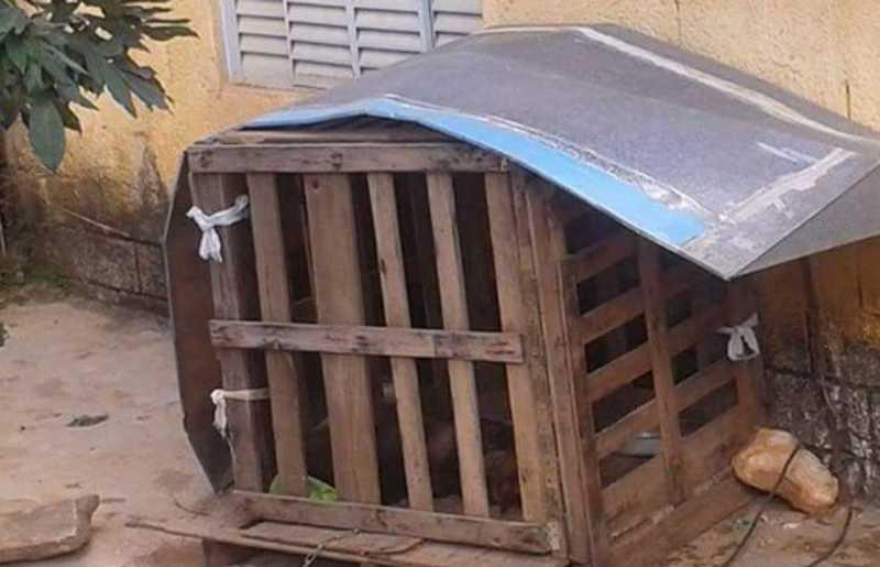 Cachorra de grande porte viveu um ano dentro dessa caixa