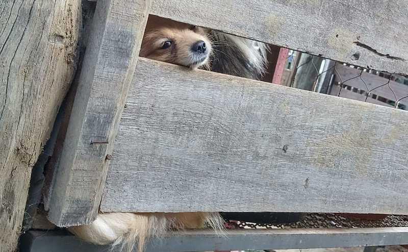 Mais de 50 cães de raça são resgatados de canil clandestino em Lagoinha — Foto: ONG Vida/Arquivo pessoal