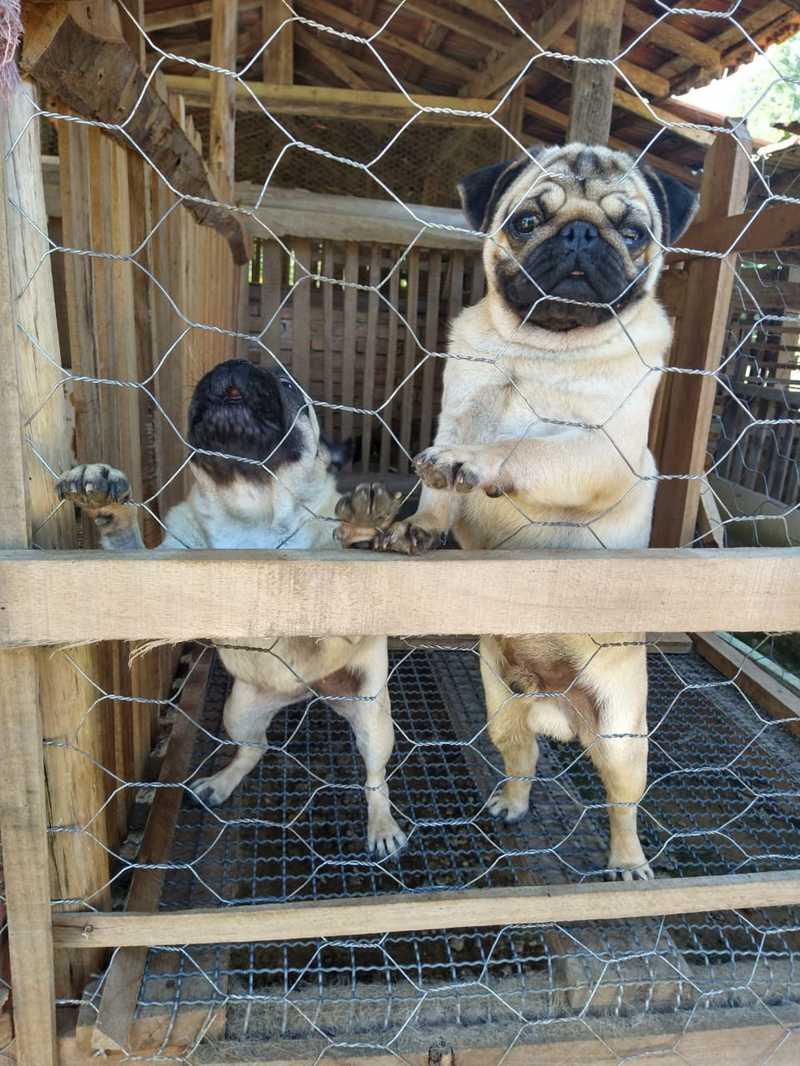 Mais de 50 cães são resgatados de canil clandestino em Lagoinha, SP