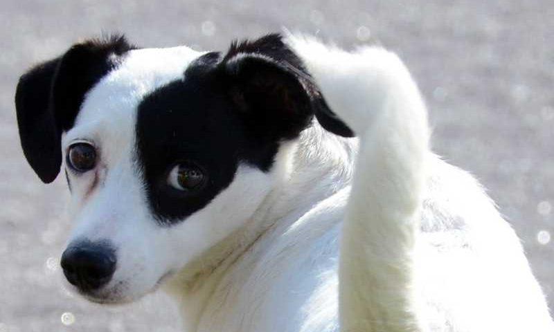 Prefeitura de Paulínia abre inscrições para Programa de Castração Animal — Foto: Divulgação