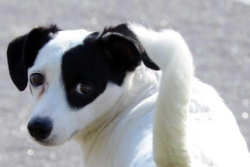Prefeitura de Paulínia (SP) abre inscrições para programa de castração animal