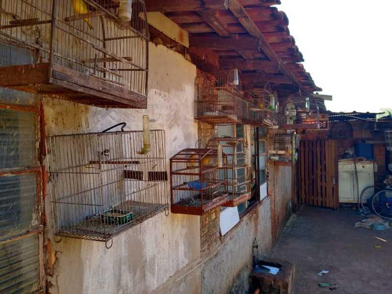 Homem é multado em R$ 42 mil por manter aves em cativeiro e situação de maus-tratos em Rio Pardo, SP