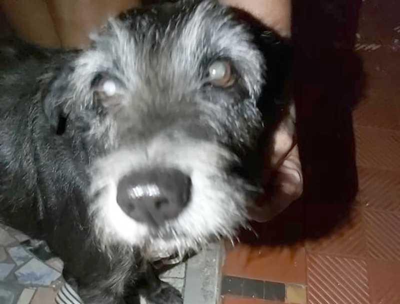 Cachorro foi resgatado por cuidadora de animais (Fotos: Arquivo pessoal)