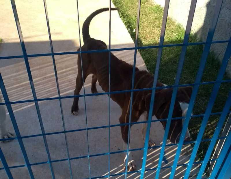 Cães 'de guarda' são flagrados com sinais de maus-tratos dentro de creche recém-inaugurada