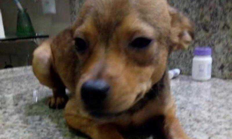 Entra em vigor lei que obriga clínicas de Taubaté (SP) a comunicarem maus-tratos a animais