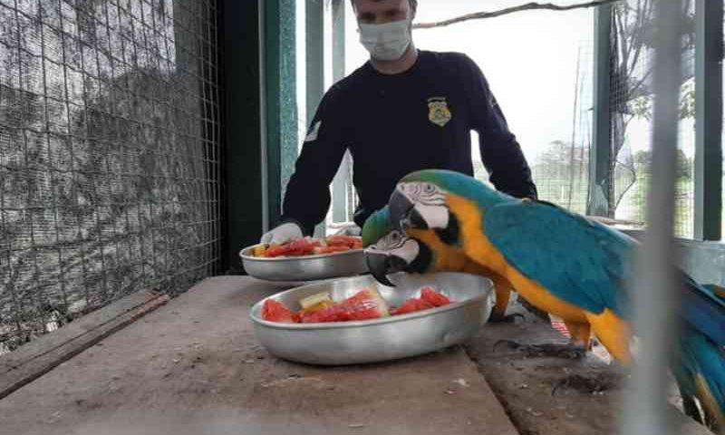 Centro que atende animais silvestres no Tocantins altera escala para poder seguir funcionando