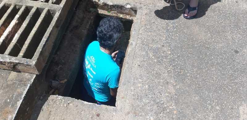 Moradores fizeram resgate do cachorro, em Palmas — Foto: Divulgação