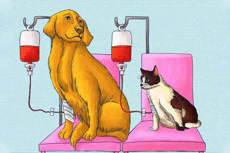 Cães e gatos podem 'doar' sangue e salvar a vida de outros animais