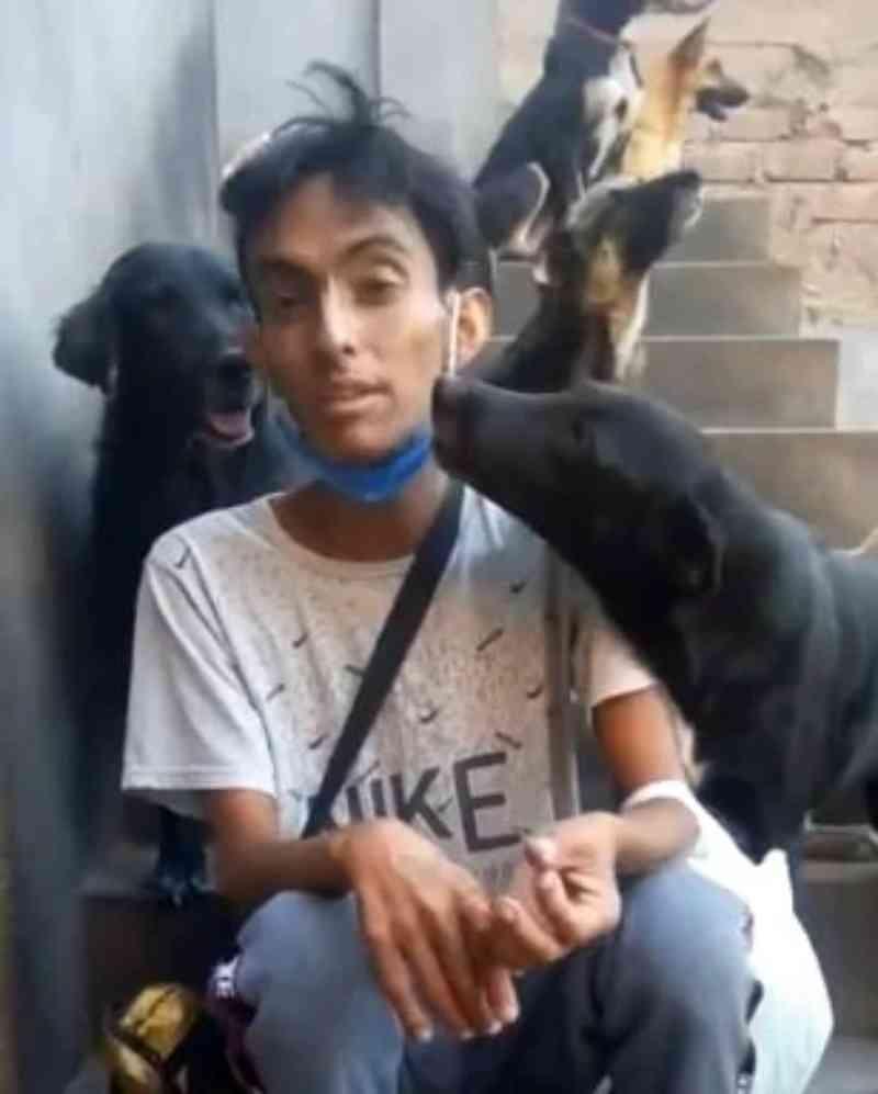 Jovem pede ajuda para encontrar um lar para seus 90 cães: 'Não posso mais cuidar deles, estou doente'