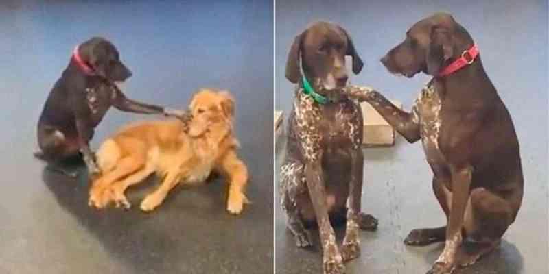 Vídeo de cachorra em abrigo que insiste em acariciar outros cães com a pata faz sucesso nas redes sociais