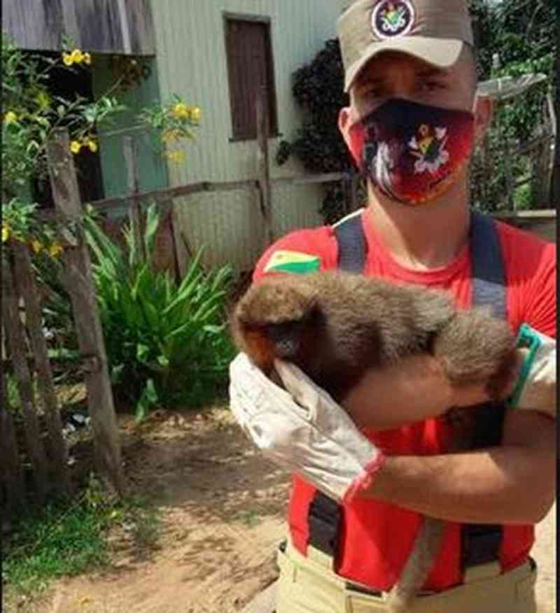 Macaco 'zogue-zogue' é resgatado no interior do AC após bombeiros receberem denúncia de maus-tratos