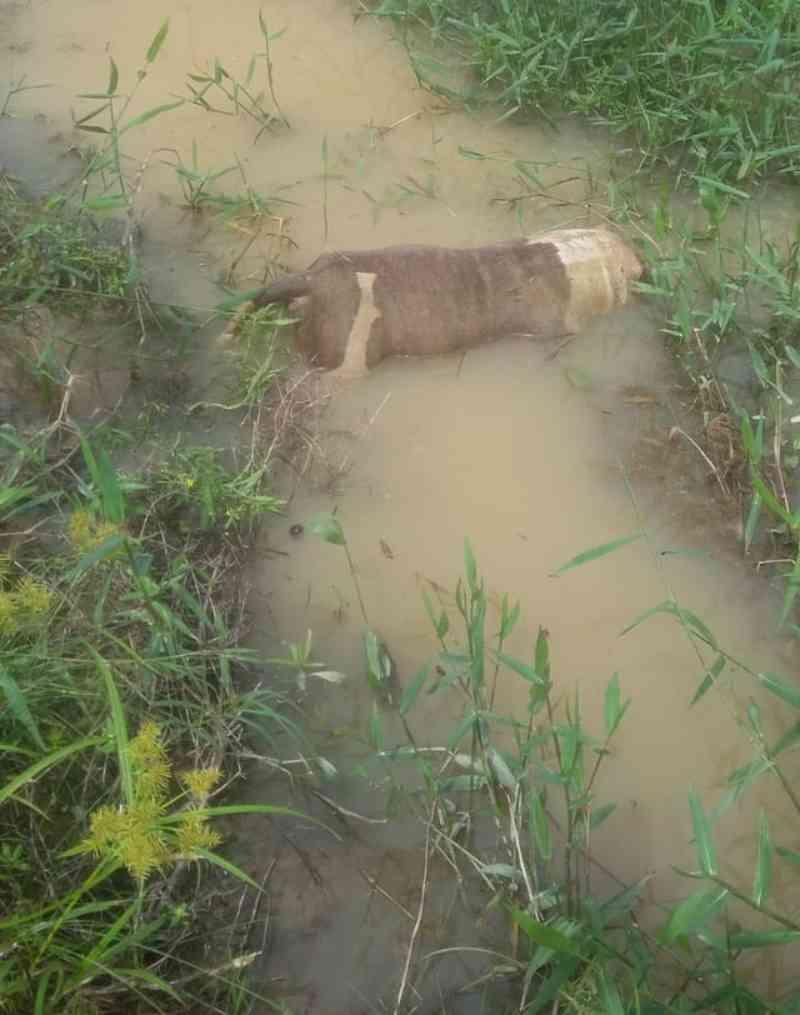 Família acha cão morto dentro de açude com ferimentos na cabeça e denuncia vizinho no AC