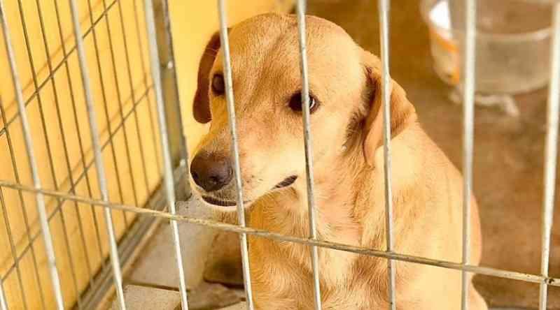 No AC, número de animais abandonados e maltratados aumentou durante pandemia