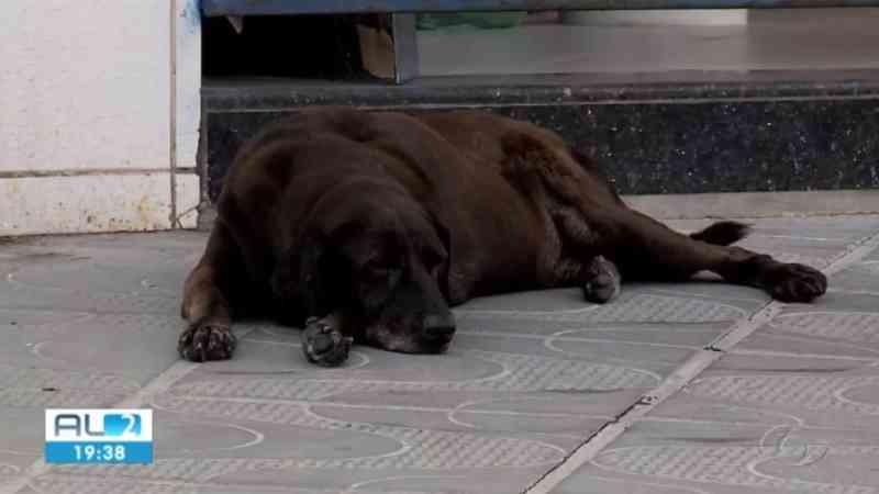 Aumenta número de animais abandonados nos bairros afetados pelas rachaduras em Maceió, AL