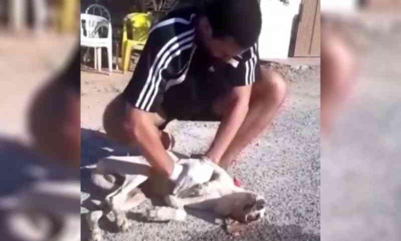Estudante de Veterinária salva cachorro envenenado em Piranhas (AL); veja vídeo