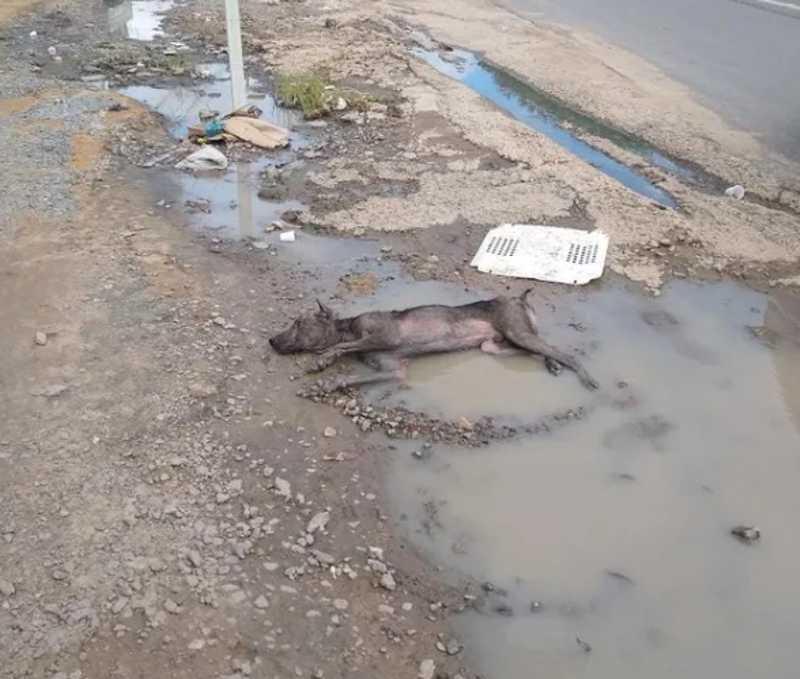 Cachorro é resgatado após ser atropelado e deixado horas sem socorro em poça de água em Maceió, AL