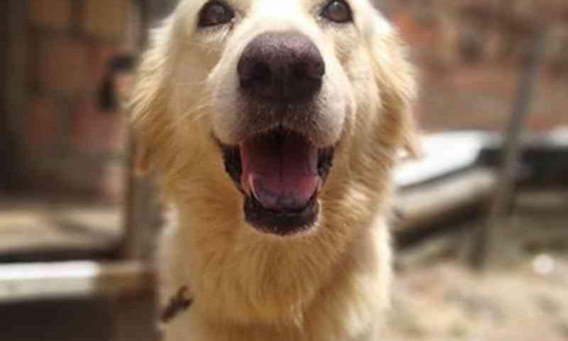 Jovem diz que cachorro de estimação foi morto em ação policial e denuncia caso em rede social, em Manaus, AM