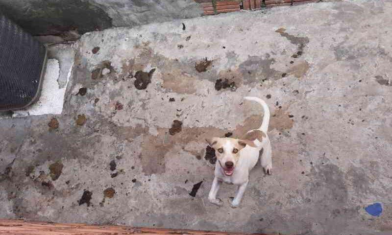 Vizinhos denunciam tutor de cães por maus-tratos em Manaus, AM