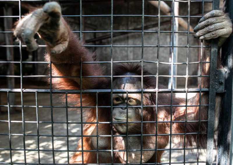 Pata Zoo, um cenário 'horrendo' no topo de um centro comercial da Tailândia