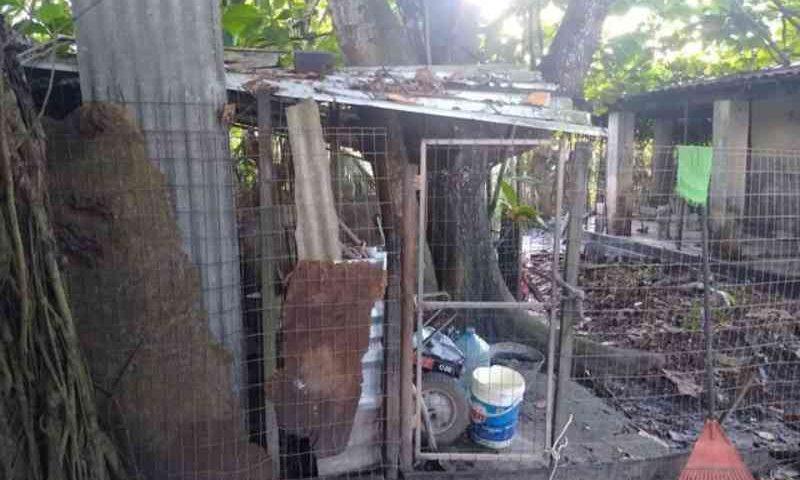 Quase 60 animais são achados em situação de maus-tratos em imóvel na região metropolitana de Salvador: 'Cena horrível'